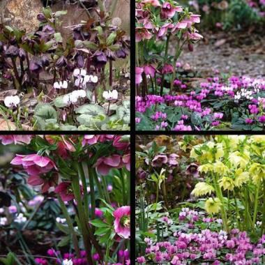 Abbinamenti di piante vivaio online un quadrato di giardino for Piante invernali da esterno