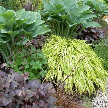 Giardino in ombra 2 vivaio online un quadrato di giardino for Piante ornamentali perenni da giardino