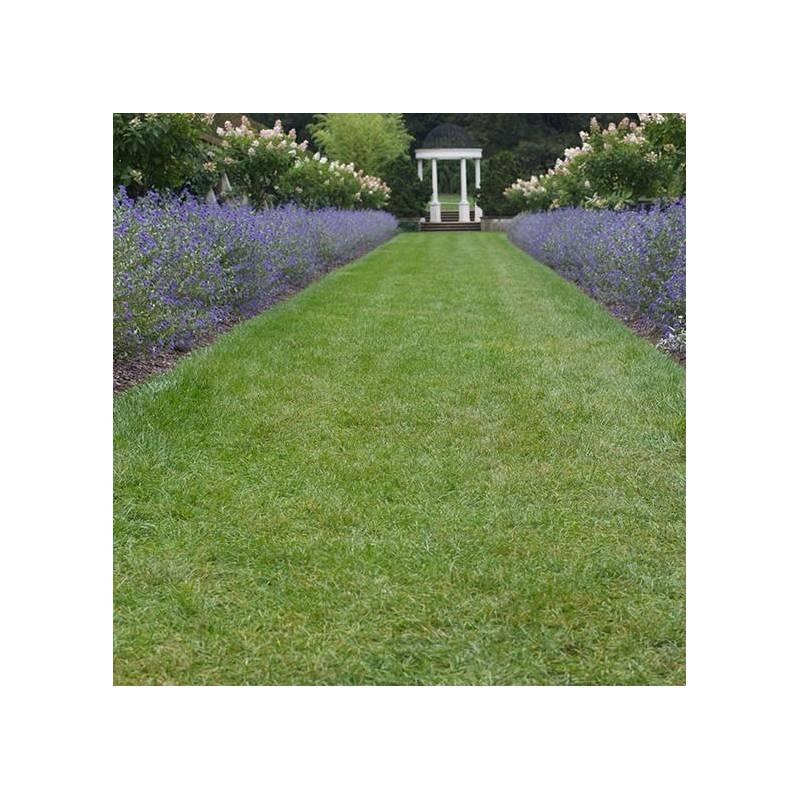 Ortensie rampicanti in vaso podophyllum hexandrum spotty - Piante da giardino fiorite ...