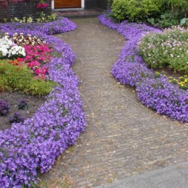Fiori estivi 6 vivaio online un quadrato di giardino for Fiori estivi perenni