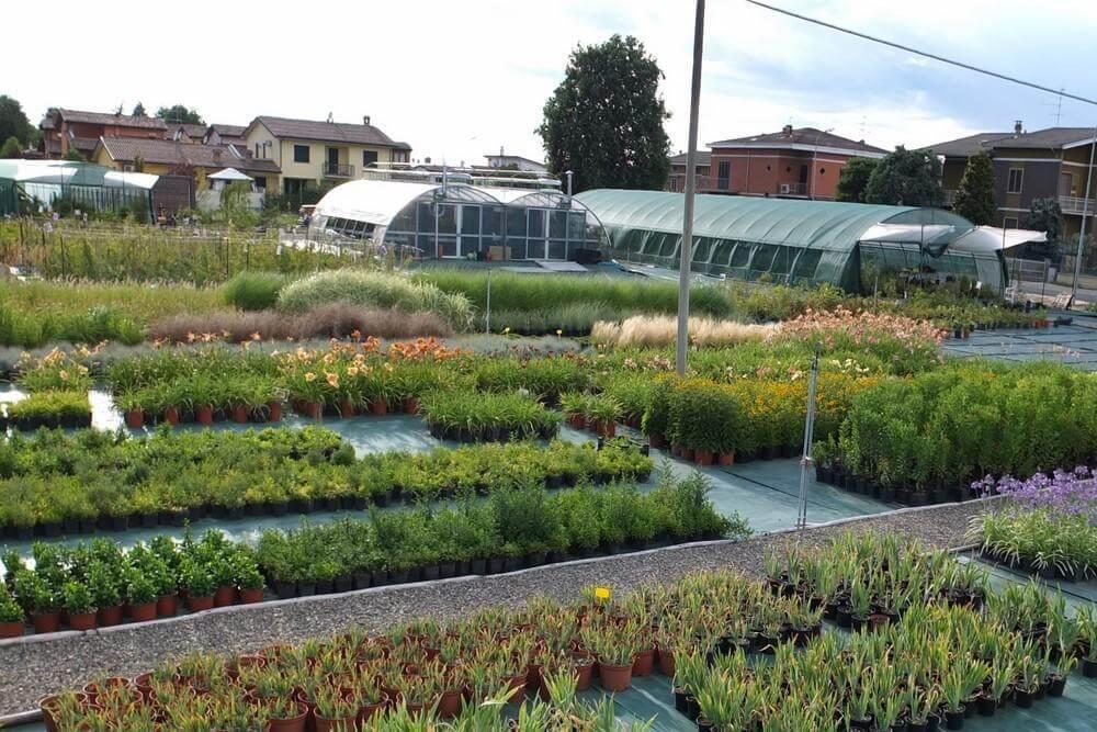 Vivaio Un quadrato di giardino - Podenzano Piacenza