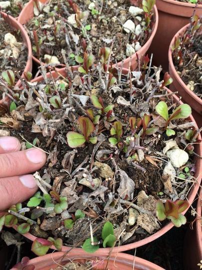 Piante da esterno perenni piante da terrazzo perenni for Piante fiorite perenni da esterno