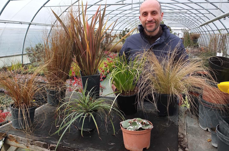 Piante da aiuole perenni creare aiuole di perenni piante for Piante da esterno in vaso perenni