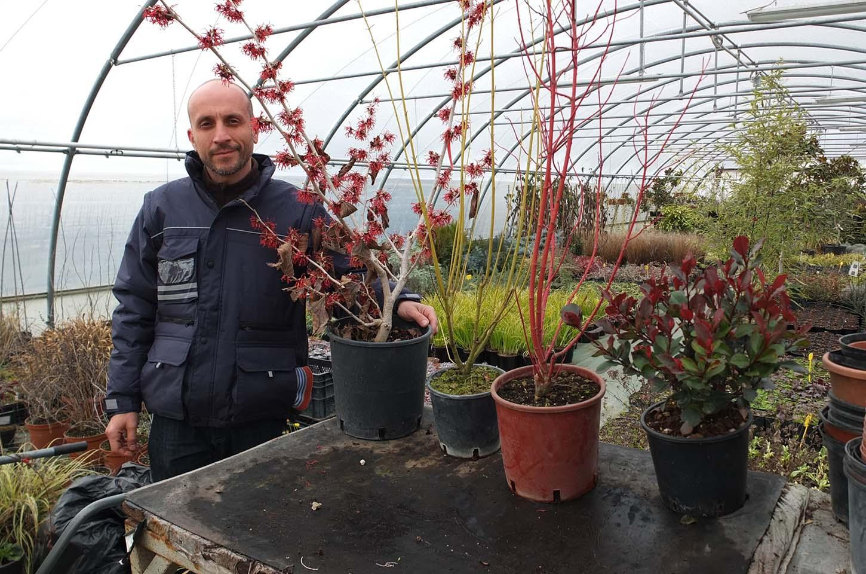 Vivaio piante perenni online