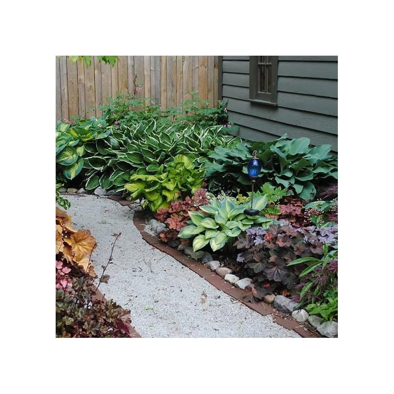 Piante Ornamentali Rampicanti : Giardino in ombra vivaio online un quadrato di