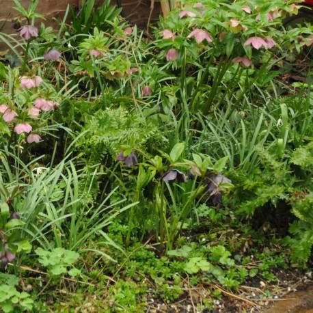 Bordura di piante invernali da ombra
