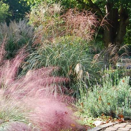 piccolo giardino a bassa manutenzione 1 - vivaio online un ... - Piccolo Giardino Quadrato