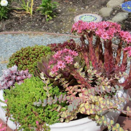 Piante grasse da esterno adatte in vaso 1 vivaio online for Piante grasse in giardino