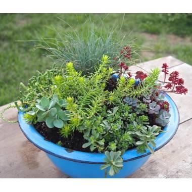 Piante grasse da esterno adatte in vaso 3 vivaio online for Piante invernali da esterno vaso