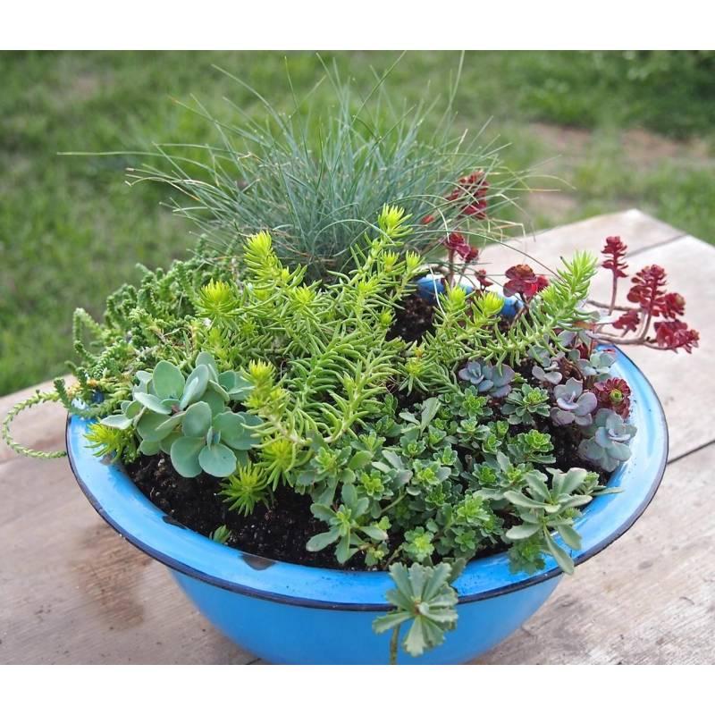Piante grasse da esterno adatte in vaso 2 vivaio online for Solo piante