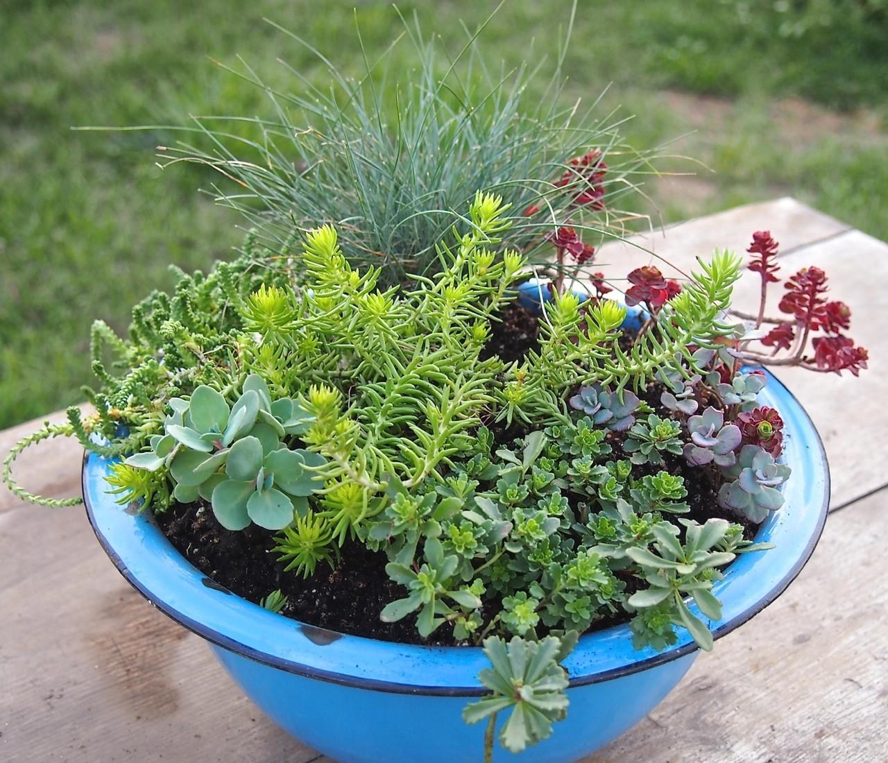 Giardini piante grasse per esterno yk35 regardsdefemmes for Piante invernali da esterno vaso