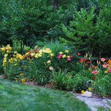 Bordura di hemerocallis da giardino