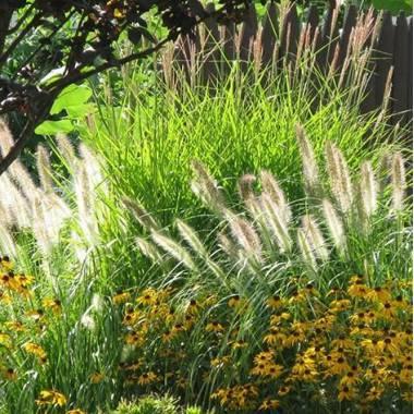 Fiori a margherita e erbe ornamentali