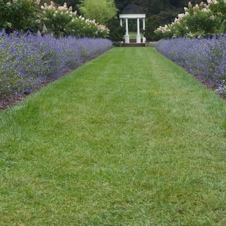 Piante da siepe fiorite vivaio online un quadrato di for Piante da siepe sempreverdi