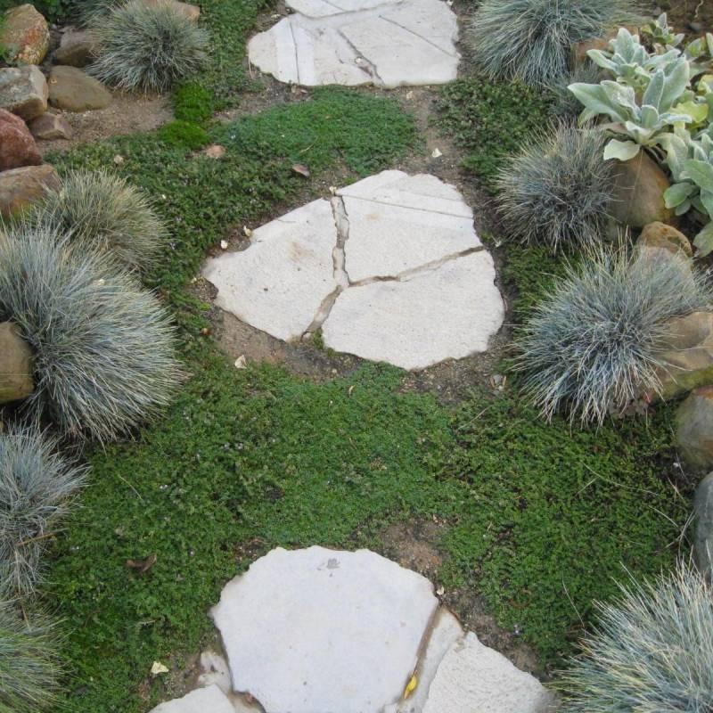 Aiuola con sassi o vialetto da giardino vivaio online un for Sassi bianchi da giardino prezzo