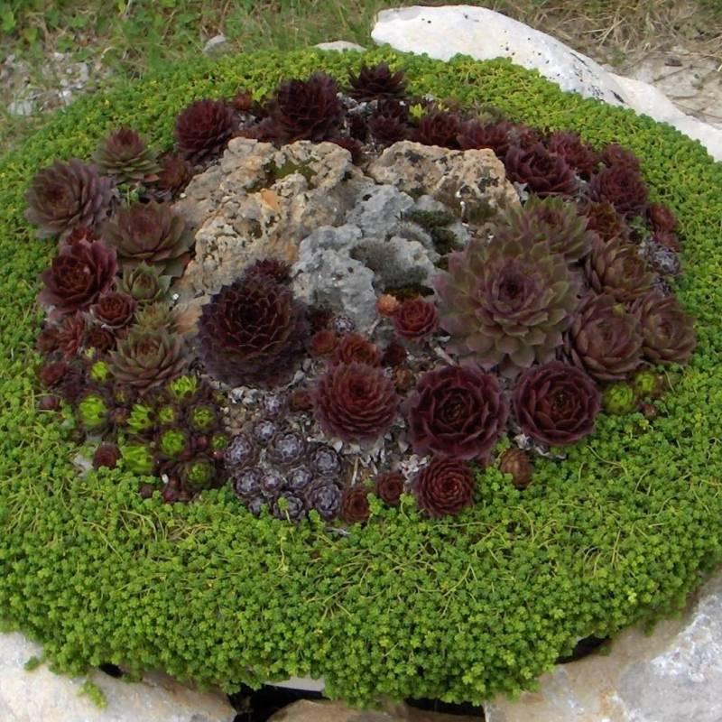 Piante grasse da esterno adatte in vaso 3 vivaio online for Piccoli giardini rocciosi