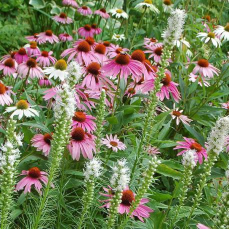 Mix di fiori rosa e bianchi estivi per farfalle