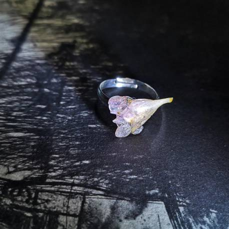 Ring with real abelia flower