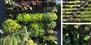 Giardini e orti verticali