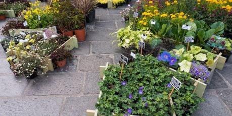 Vivaio On Line Un Quadrato Di Giardino Piante Perenni